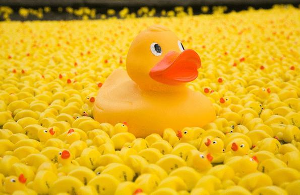 Shrewsbury River Festival 2018 Duck Race